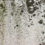 mold removal atlanta